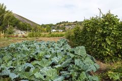 Rio de Onor Communal Gardens. View of a large communal veggie garden still alive in the rural village of Rio de Onor, Braganca, Portugal Royalty Free Stock Photo