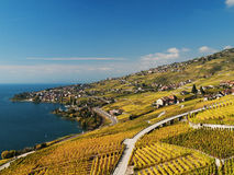 View In Lavaux Towards Cully Royalty Free Stock Image