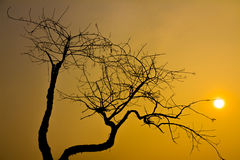 View through leafless tree. On red sun in sunset royalty free stock photos