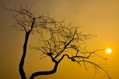 View through leafless tree Royalty Free Stock Photos