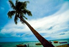 View of leaning coconut palm tree on the yellow sandy beach in the ocean stock photography
