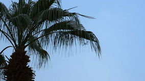 A view through the leaves of a palm tree on an airplane flying in the blue sky. The plane flies over the yellow building stock footage