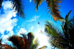 A plane flying above the palm stock photo