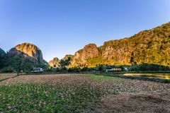 Limestone forest in South Sulawesi Indonesia Royalty Free Stock Photos