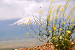 View of the Little Ararat from Armenia. One of the cones of the volcanic massif Ararat Stock Photo