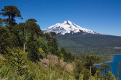 View of Llaima volcano in Chile. View of Llaima volcano in national park of Conguillio in Chile Royalty Free Stock Image