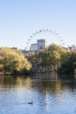 View of the London Eye from Hyde park. A view of the lake at Hyde Park in London with the London Eye in the background stock photography