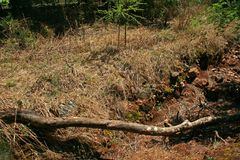 Long dry branch lying over a ravine. A view of a long dry branch lying over the width of a ravine Royalty Free Stock Images