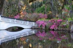 Charleston SC Long White Bridge and Spring Azaleas Royalty Free Stock Images
