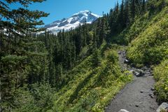 Heliotrope Ridge trail through forests to Mount Baker, Washington State. View looking up the Heliotrope Ridge hiking trail on the west flank of Washington State` royalty free stock photos