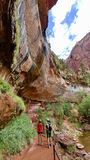 Emerald Pools Trail at Zion National Park. This is a view looking up at the rock walls that stand over the Upper Emerald Pool at Zion National Park royalty free stock photos