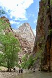The Narrows at Zion National Park. This is a view looking upstream at the Virgin River through the Narrows at Zion National Park royalty free stock photography