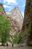 The Narrows at Zion National Park. This is a view looking upstream at the Virgin River through the Narrows at Zion National Park Royalty Free Stock Image