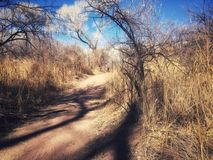The Path We Choose Dirt. View of Lost Trail Cottonwood Arizona. Trail, trees, Nature, Forest walk. Photo Editing down as if walking in a ferry forest. With more Royalty Free Stock Image
