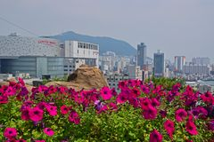 View of Lotte Mall in Busan City with purple trumpet flower in the foreground Stock Photo