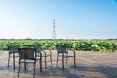 View lotus platform Stock Images