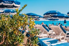View of the loungers on the beach on a sunny day. Defocus - view of the loungers on the beach on a sunny day - green bush in the foreground stock photography