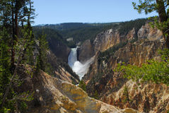Lower Yellowstone Falls. View of lower Yellowstone Falls in the morning royalty free stock photos