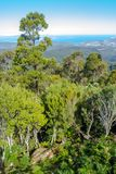 Stunning view of lowlands through mountain forest, mount wellington, Tasmania. View of lowlands through mountain forest, mount wellington, Tasmania Royalty Free Stock Images