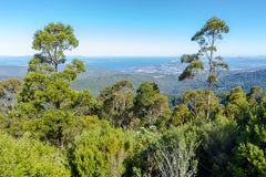 Stunning view of lowlands through mountain forest, mount wellington, Tasmania. View of lowlands through mountain forest, mount wellington, Tasmania Stock Image