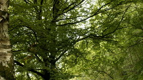 A View of lush forest stock footage