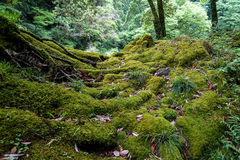 View of lush green moss, lichen, plant, trees and dried leaves i royalty free stock photography