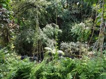 View of the Lush Rainforest. Big Island, Papikou, Hawaii Royalty Free Stock Images