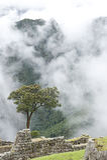 View From Machu Picchu Stock Photo