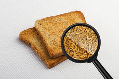 View through a magnifying glass to toast bread. Royalty Free Stock Photo