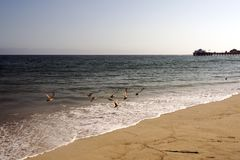 A view of Malibu beach and a bird stork flying over the ocean in California.  Royalty Free Stock Image