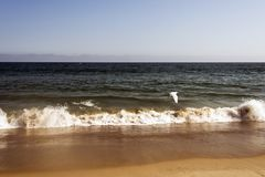 A view of Malibu beach and a bird stork flying over the ocean in California.  Royalty Free Stock Photos