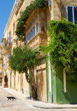 A view of Maltese house in the hot day and the black cat crosses. The street. Birgu, Malta Stock Image