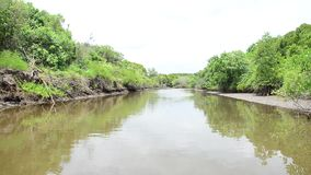 View of Mangroves forest or Intertidal forest from service long tail boat stock video