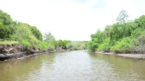 View of Mangroves forest or Intertidal forest from service long tail boat stock footage