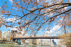 A view on Manhattan and East River in spring. Stock Photography
