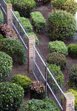 View of manicured bushes and fence Stock Image