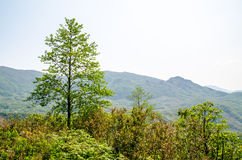 View of many moutain from Sapa highland city Stock Photos