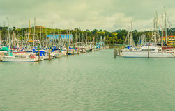 View of marina, Gulf Harbour, Auckland, New Zealand. Photo took in New Zealand, photo is usable on picture post card, calendar, gardening, magazine Royalty Free Stock Photography