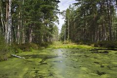 A view of marsh in kemeri national park , latvia royalty free stock images