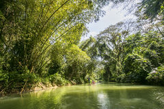 The view of Martha Brae river with a raft in a background. The view of Martha Brae river with a raft in a background, a popular tourist attraction in Jamaica Royalty Free Stock Photography
