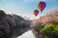 View of massive cherry blossoming in Tokyo, Japan as background. Photoed at Chidorigafuchi, Tokyo, Japan Royalty Free Stock Photos