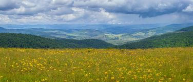 View on the meadow. Blossoming meadow in Ukrainian Carpathians in summer Royalty Free Stock Photo
