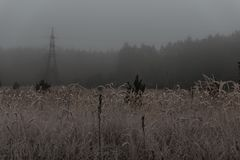 View of meadow with grain crops on cold misty morning in autumn. With electricity pole, vintage style with grain Stock Photography