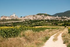 Sunflower field near Assisi, Italy. View of the medieval town of Assisi from the countryside Royalty Free Stock Photos