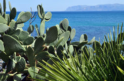 View on the Mediterranean sea with barbary fig plant Royalty Free Stock Photo