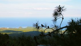 View of Mediterranean sea and southern coast of Turkey through branches of pine, day time. Cloudy weather stock footage