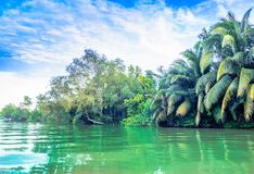 Mekong delta by Can Tho in Vietnam. View on Mekong delta by Can Tho in Vietnam Stock Photos