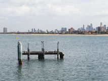 View of Melbourne, and white-breasted cormorants in Australia Royalty Free Stock Image