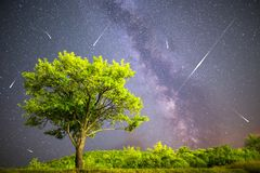 Green tree Milky way night sky falling stars Stock Photography