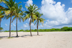 View of Miami Beach with Palm trees. As background in Florida, USA Stock Images